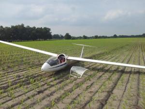 Außenlandung im Maisfeld